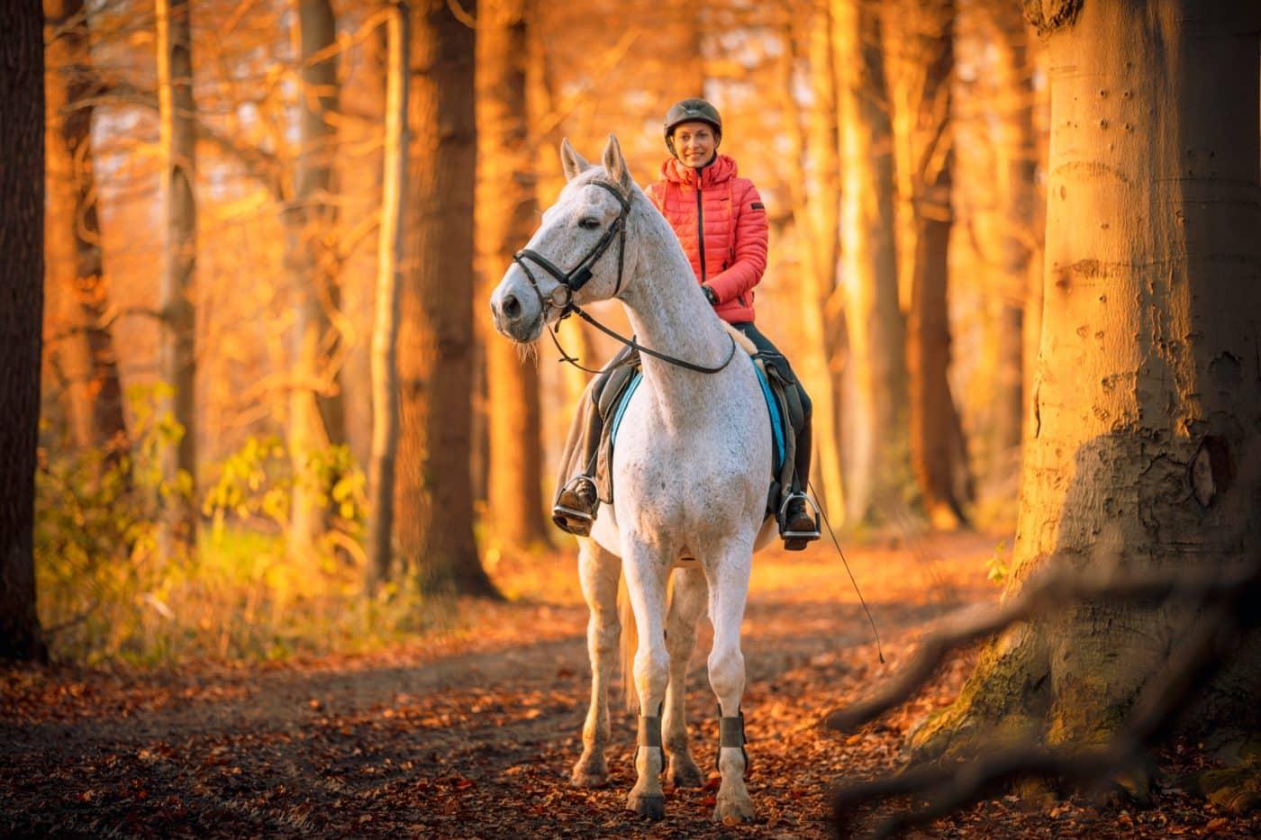 Pferdefotos im Münsterland