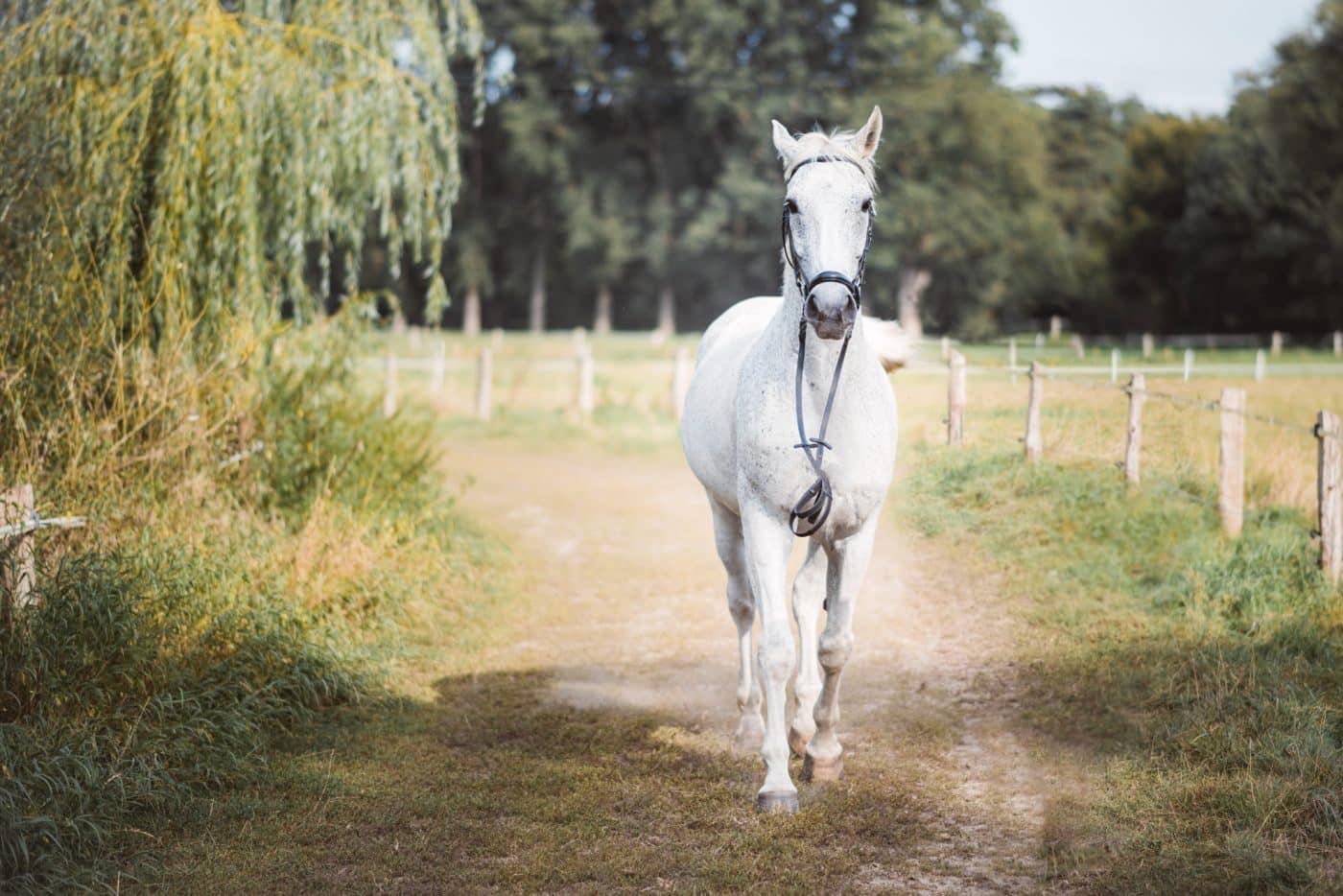 Pferdefotos in Münster Fotos auf der Anlage am Reitstall